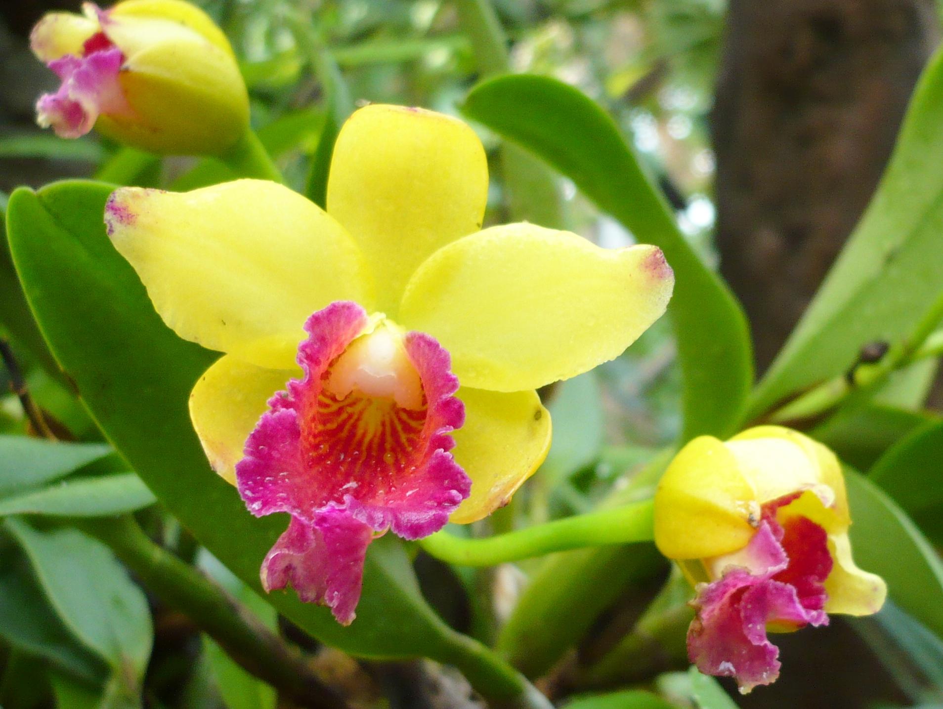 За последние годы цветки орхидеи стали одними из самых любимых...